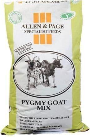 A & p pygmy goat mix